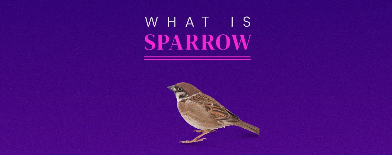 What is Sparrow